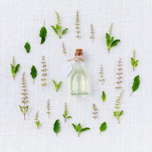 aromi e piante per fitoterapia